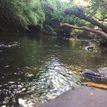 Vista arroyo Laureles al fondo del Parque.