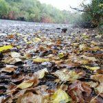 otoño y cantos rodados
